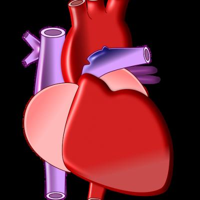 Širdies ir kraujagyslių sistemos ligos -